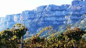 Wein aus Katalonien, katalanischer Wein